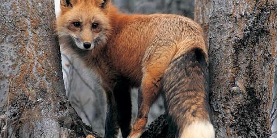City Fox Controversy