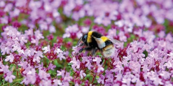 Bringing Back the Bees