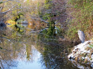 DodderActionCleanUp3 -Dodder with heron