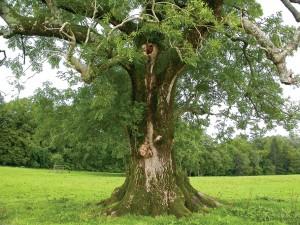 Green Sceene ash-tree[1]