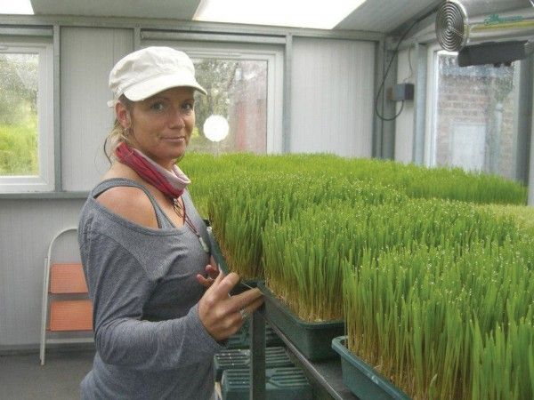 Can Wheatgrass Cure Cancer