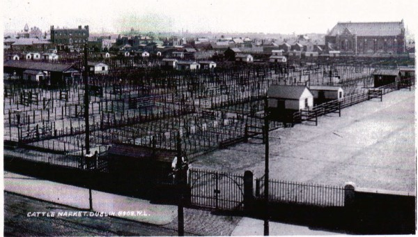 dublin-cattle-market1