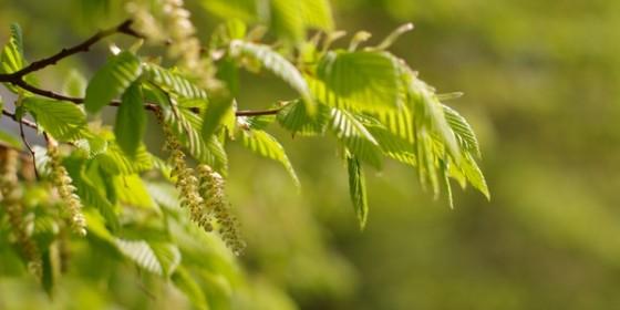 National Biodiversity Week's Dusk Chorus