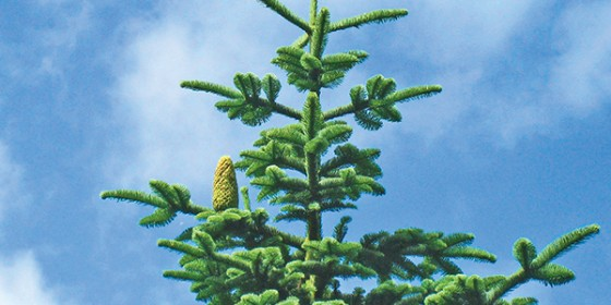 The Green Scene: Seasonal Magic