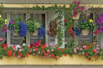Balconies in Bloom