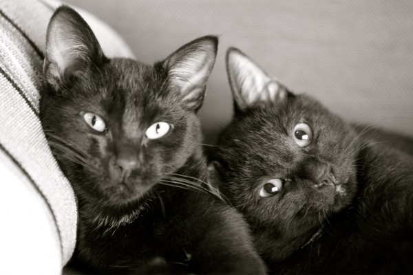 Above: Picture of Kalu and Killy courtesy of Sandymount Pet Hospital.