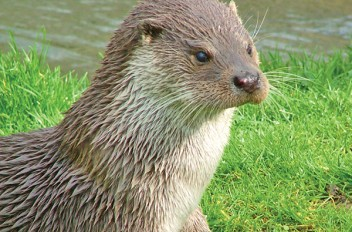 The Otter Survey 2016