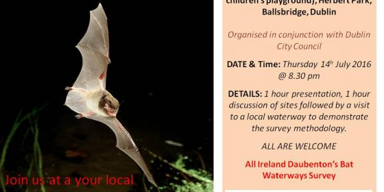 Learn about and Protect the Local Bat Habitat