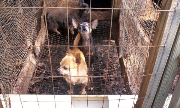 Illegal puppy trade conference comes to UCD, Belfield