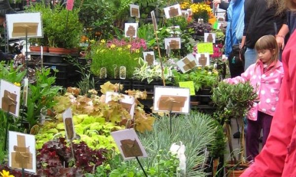 Plants for sale in South East Area