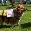 Canine Competition for Sandymount