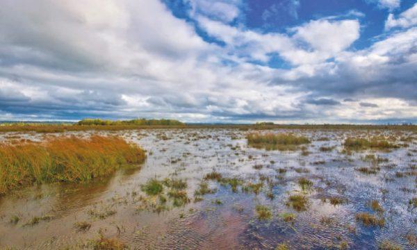 Precious Heaney Homeland in Peril