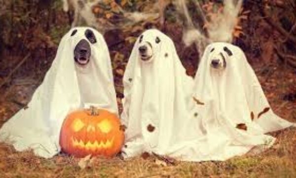 Pet safety this Halloween