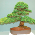 DIY Pine Cone Bonsai Tree