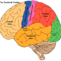 Looking After Your Brain: Headway Interview for Brain Awareness Week 2021