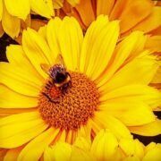 Irish grown flower market business boom!